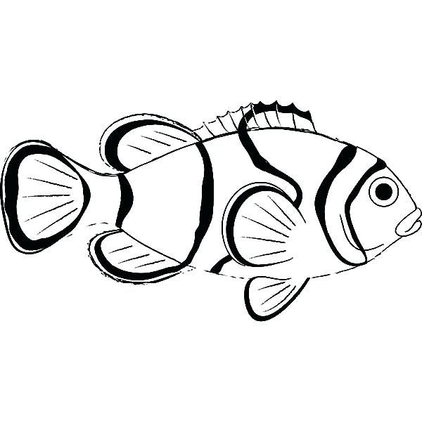 Saltwater Fish Drawing at GetDrawings   Free download