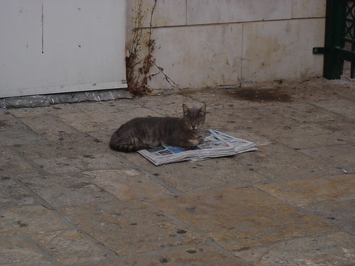 Cat on newspapers