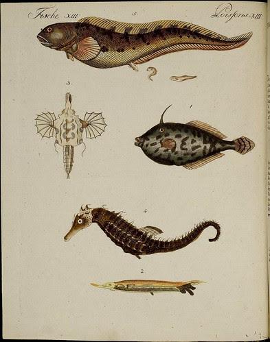 fish + seahorse