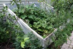 side garden 019