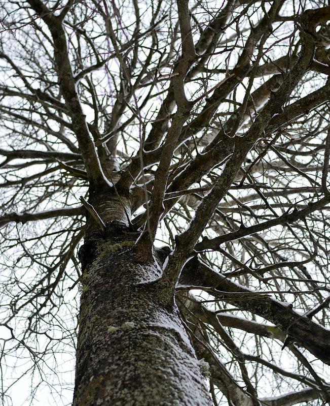 062 träd