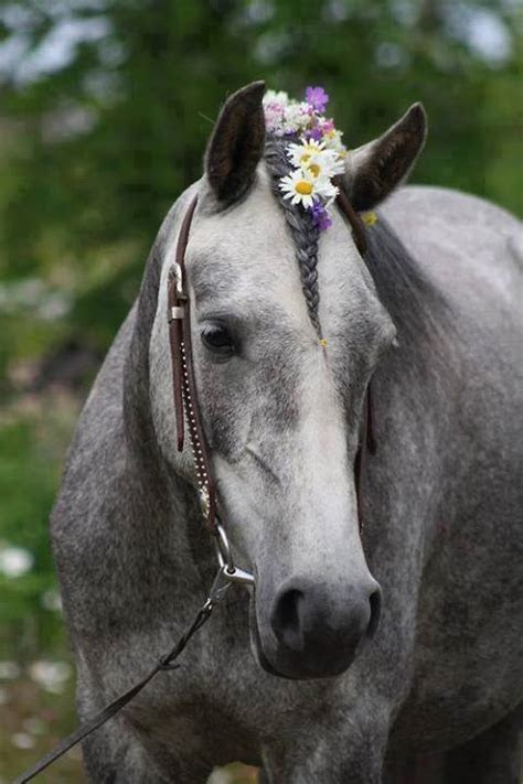 24 best images about Horse Hairstyles on Pinterest   How