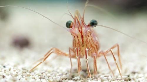 γιατί-θα-πρέπει-να-σταματήσουμε-να-τρώμε-γαρίδες