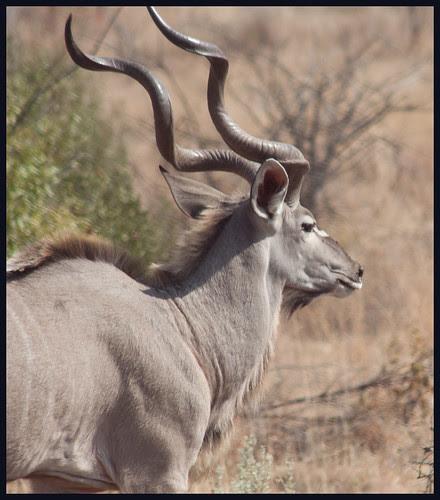 safari in Zuid Afrika by hans van egdom