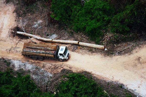 Imagem de arquivo feita pela ONG Survival International mostra atividade de exploração madeireira dentro do território indígena dos Awá (Foto: Greenpeace/ Bruno Kelly/ Survival)