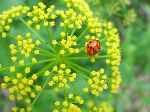 47-- 8/365. Lady bug that emerged