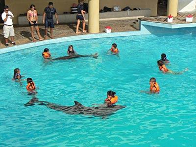 Paul + Clem et autres en cercles avec dauphins autour.jpg