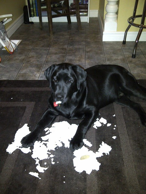 Levi & the toilet paper