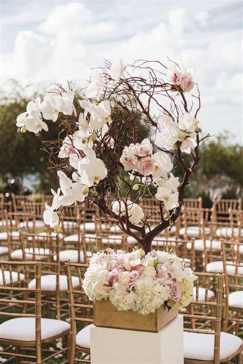 Best 25  Manzanita tree ideas on Pinterest   Manzanita