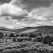 Road out of Bodie