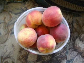 First 2015 Peaches