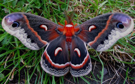 See Some Of The Most Beautiful Butterflies In the World ...