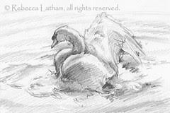BathingSwanSketch-RLatham