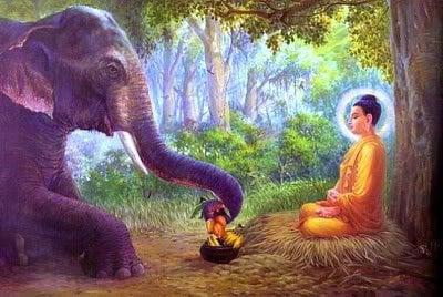 What The Teachers Say About Doggie Dharma Did Buddha Teach That
