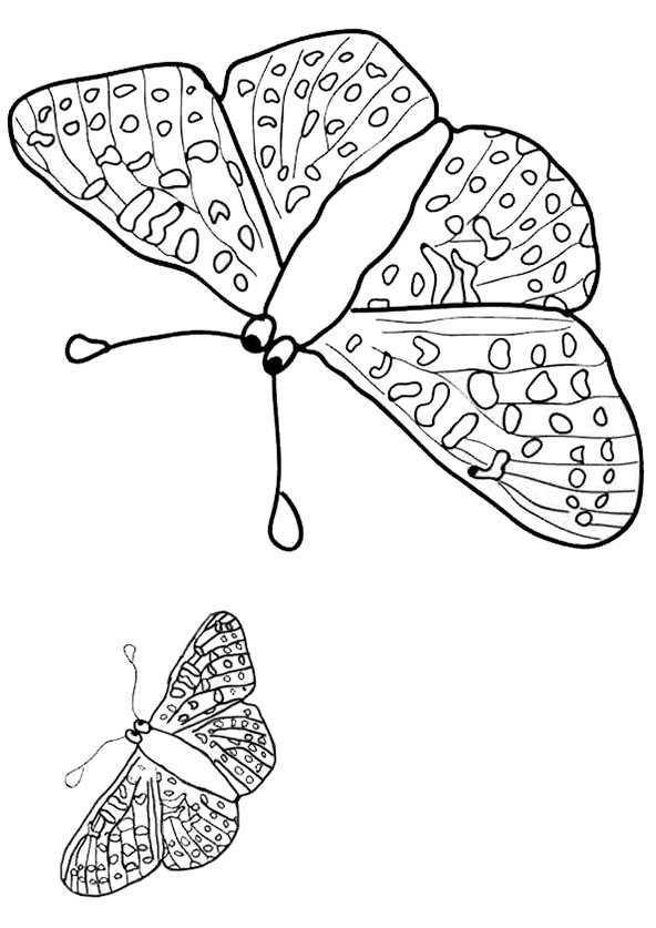 Schmetterling 6 | Ausmalbilder Kostenlos