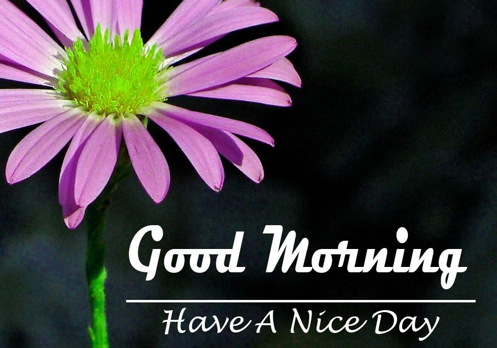 good morning pics 1