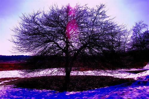 The Purpler Tree