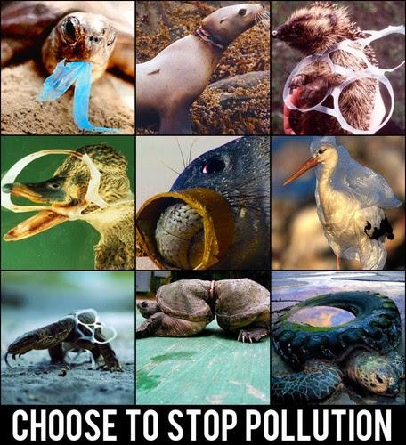 escolha dizer não à poluição