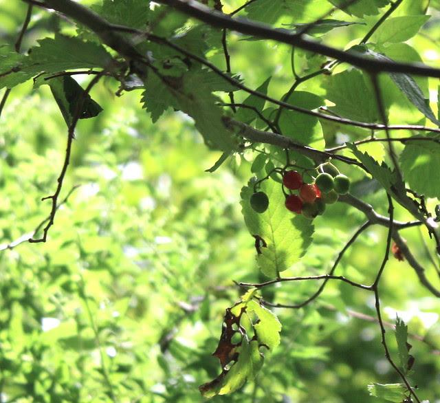 Beaver Creek Foliage