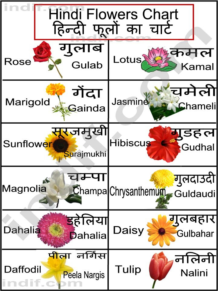 Hindi Flowers Chart À¤¹ À¤¨ À¤¦ À¤« À¤² À¤• À¤š À¤° À¤Ÿ Basic Flowers From India