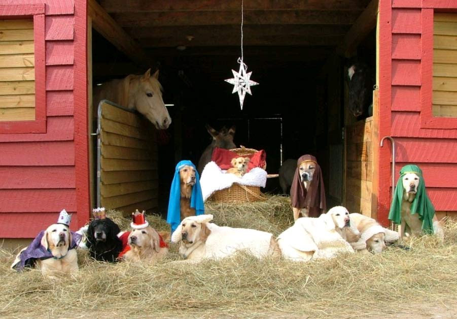 Dogs Nativity Scene photo