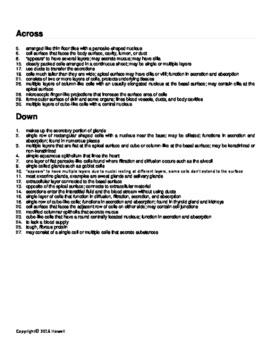 31 Epithelial Tissue Worksheet Answers   Worksheet Project ...