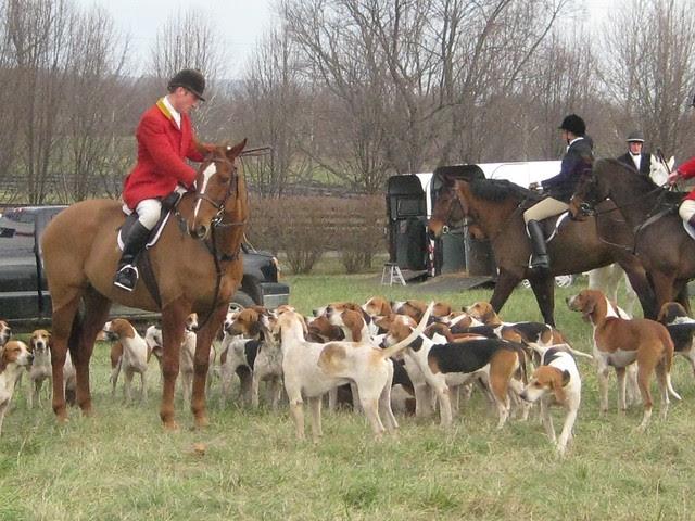 piedmont foxhounds II