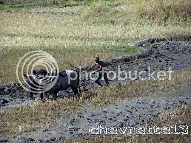 http://i1252.photobucket.com/albums/hh578/chevrette13/Madagascar/DSCN1008640x480_zpsa6f0ac29.jpg