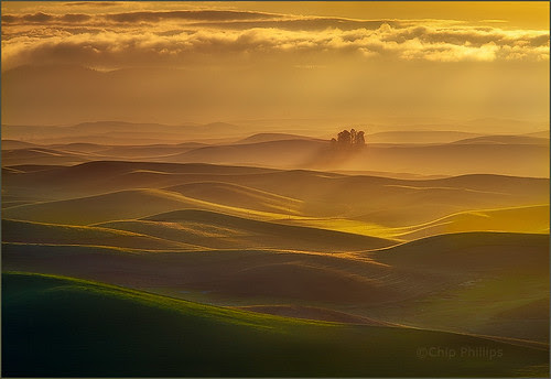 Small Forest, Palouse Hills por Chip Phillips
