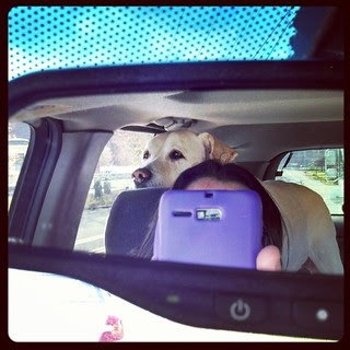 My copilot today! #dogstagram #love #bigdog
