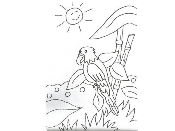 Dibujode La Selva Paracolorear Imagui