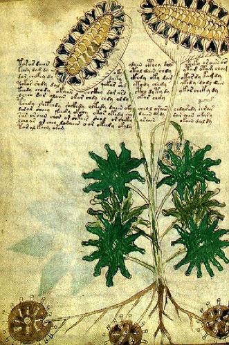 kallisong:  Voynich's manuscript - …garden journal's are a beautiful thing!