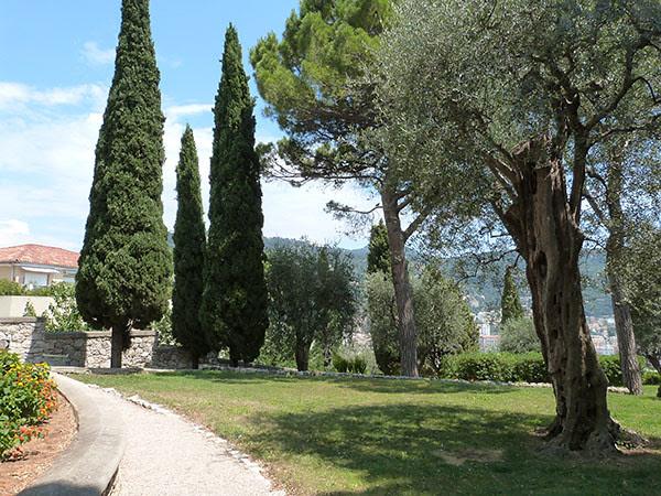 les arbres du cimetière