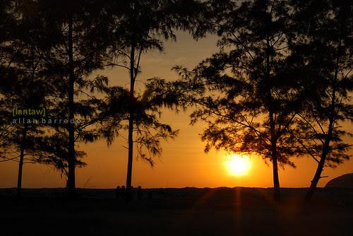 Nagsasa Pine Silhouettes (Sunset)