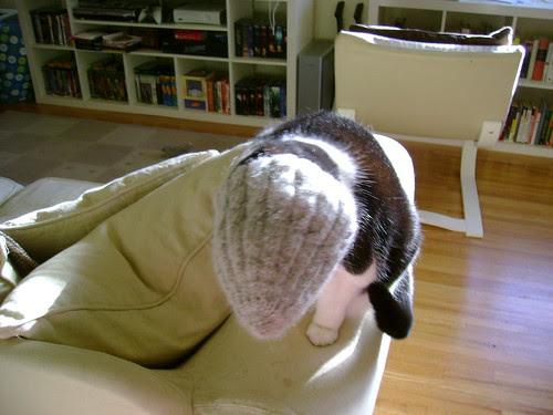 the hat eats maeve