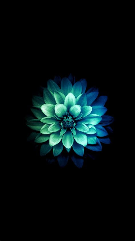 iphone  official flower wallpaper google search