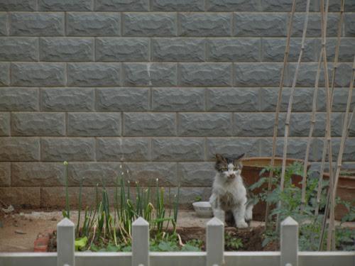 Cats in Shenyang, China _ 0259