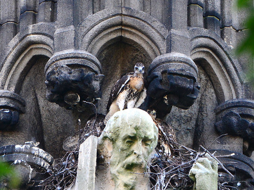 Red-Tail Trio