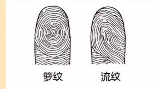 「只有拇指是流紋」的圖片搜尋結果