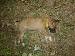Cão foi agredido até a morte em Tarrafas (Foto: Polícia Militar/ Divulgação)