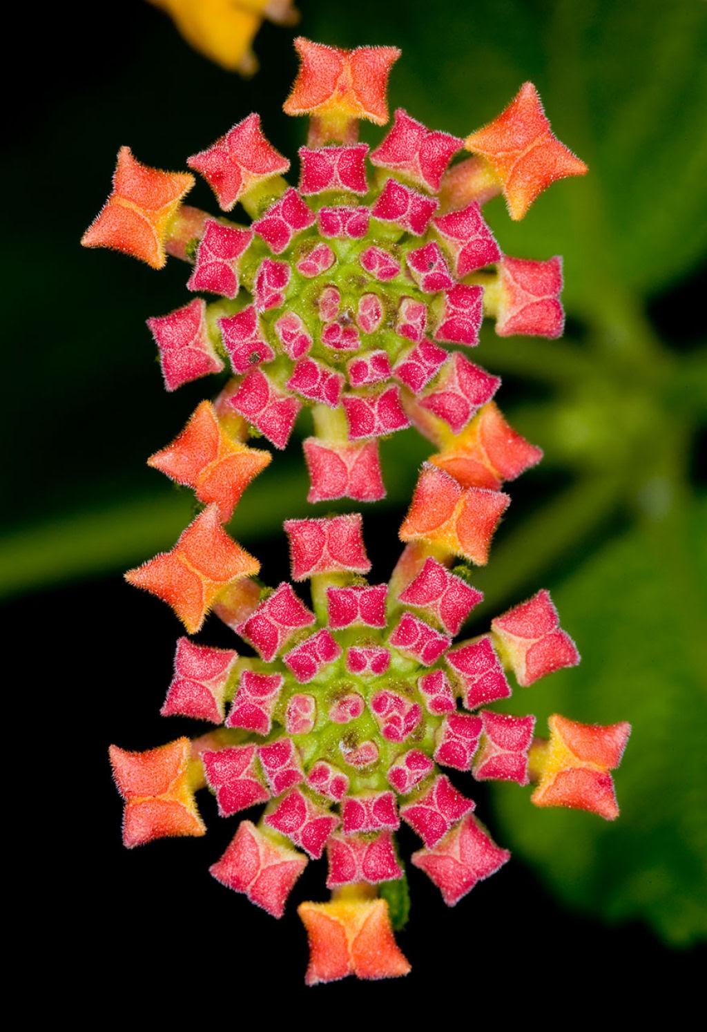 25 Fotografias de plantas para os amantes da matemática 04