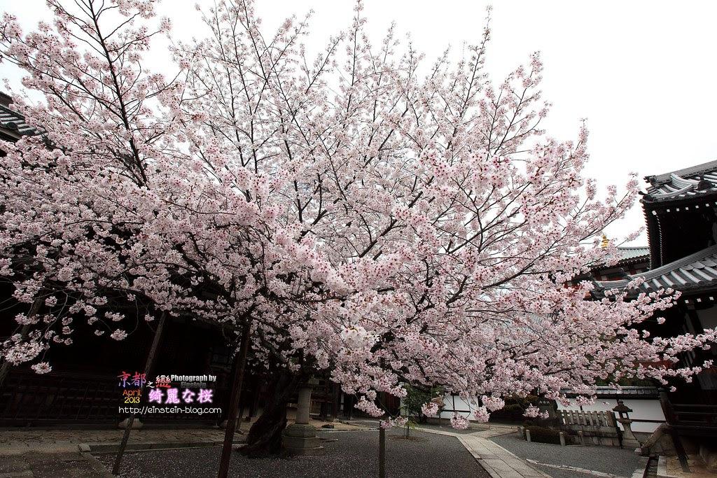 2013-04-03-11h16m59IMG_3790
