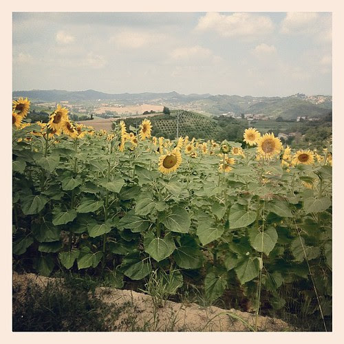 Sunflowers:))) Girasoli:)))