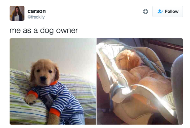 When you consider your dog your baby: