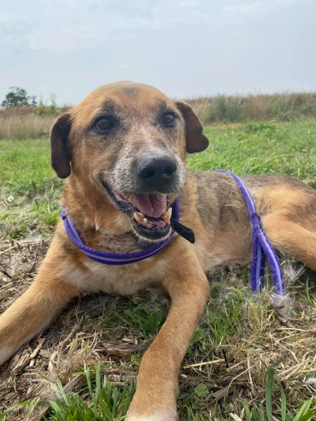 Eric – 10 year old male Cross-Breed