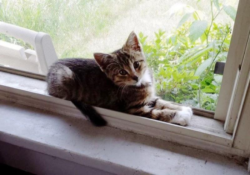 Больше никакого блуждания в лесу. Котенок обожает сидеть на окне своего постоянного и любящего дома. животные, коты, котёнок