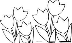Lale Laleler çiçek Boyama Sayfası