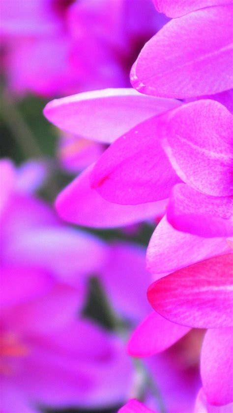 Purple Flower Petals Macro Android Wallpaper free download