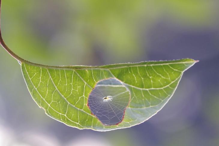 una raña hizo su teleraña en una hoja de un bosque
