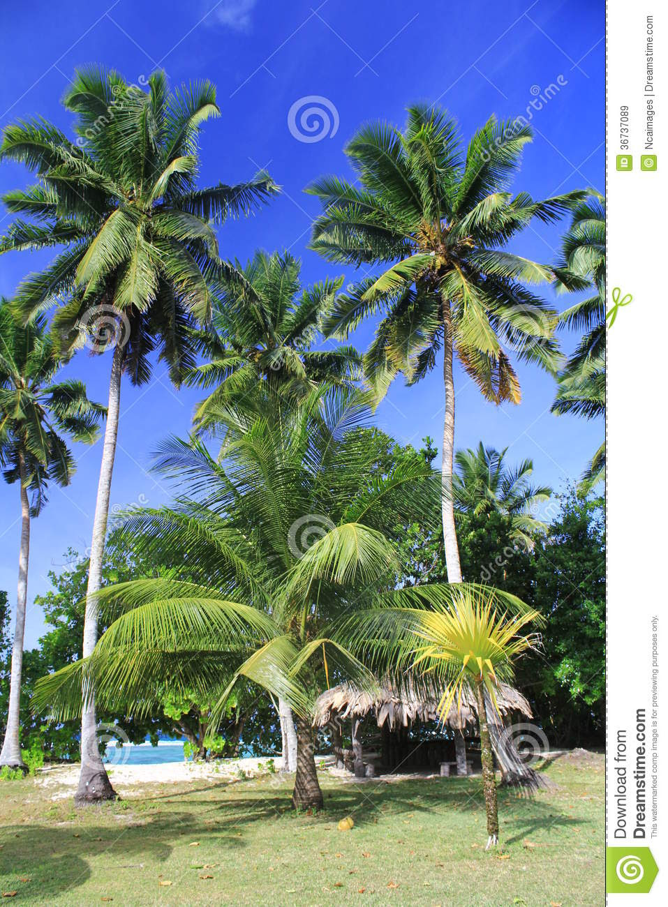 tropical landscape hut under coconut trees garden edge indian ocea 36737089